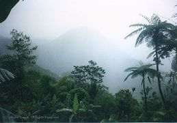 Pitons in the mist