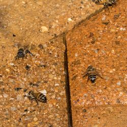 Bees 2014-08-09