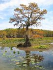 Caddo Lake 03