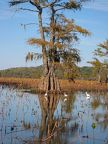 Caddo Lake 04