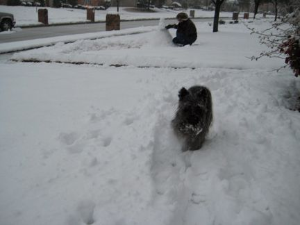 Chip running in snow