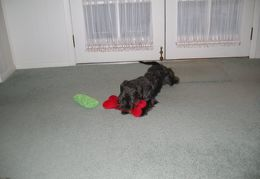 Sophie with her new red toy