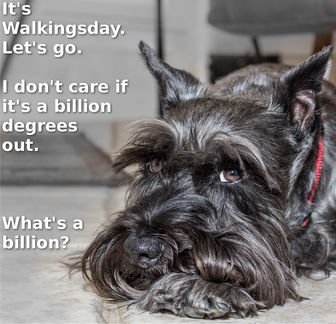 ChipKnows-Its-Walkingsday