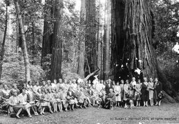 1-Catherine Brantley with tour group, Muir Woods, 29 Jun 1930 - F. Ransome Fotografer