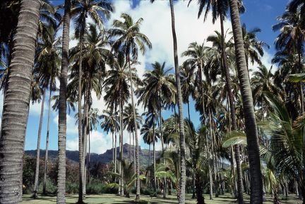 1977 Hawaii 023 Coco Palms