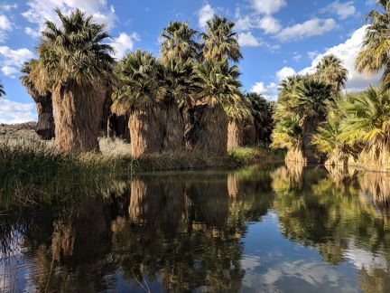 046-Coachella Nature Preserve-20190312 Coachella (8)