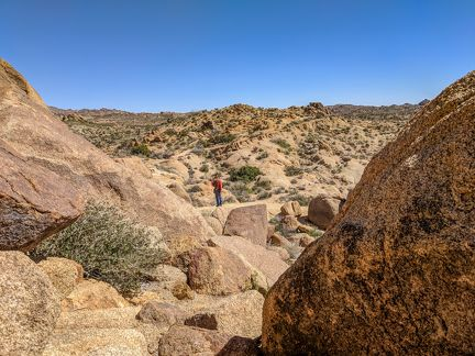 034-Joshua Tree National Park,-20190313 Joshua Tree NP (37)