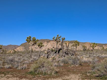 070-Joshua Tree National Park,-20190313 Joshua Tree NP (85)